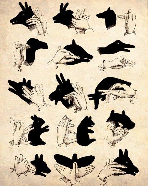 Как сделать тени животных руками из