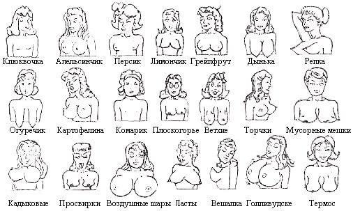 Классификация женской груди фото